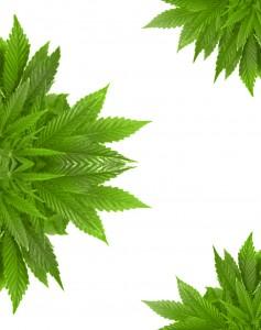 Cannabis Institute