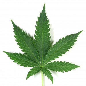 Medical marijuana school
