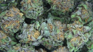 Marijuana business permits